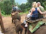 Pohled ze sloního hřbetu