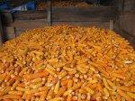 Zásobárna kukuřice